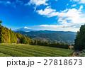 【静岡県】富士山と茶畑 27818673