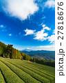 【静岡県】富士山と茶畑 27818676