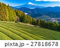 【静岡県】富士山と茶畑 27818678
