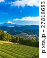 【静岡県】富士山と茶畑 27818683