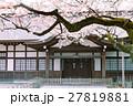 桜と建物 靖国神社 27819881
