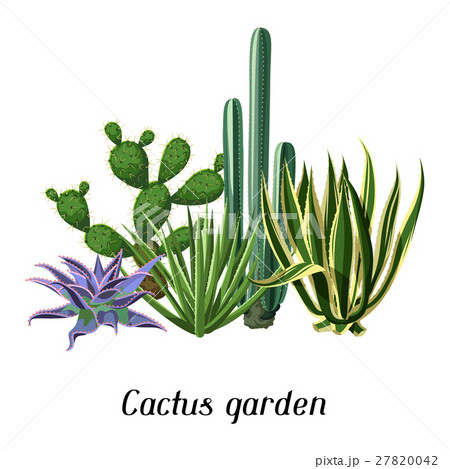 Card with cactuses and succulents set. Plants of 27820042