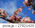 桜 花 小鳥の写真 27821420