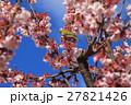 桜 花 小鳥の写真 27821426