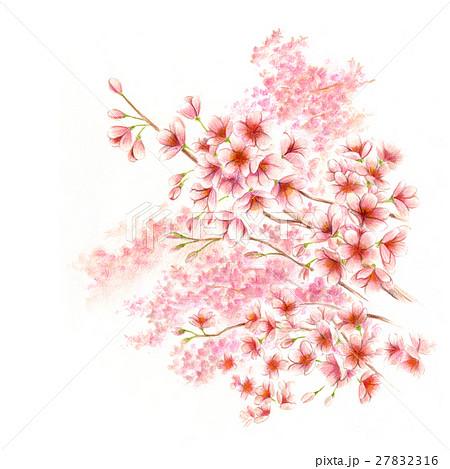 桜が満開 27832316