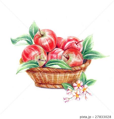 とれたてリンゴ 27833028