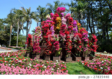 南国宮崎 春の風景 27835440