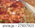 鮮やかな紅葉と着物の女性 ポートレート 27837925