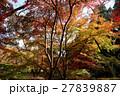 京都勝持寺の秋 27839887