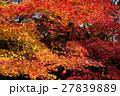 京都勝持寺の秋 27839889