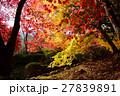 京都勝持寺の秋 27839891