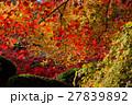 京都勝持寺の秋 27839892