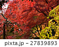 京都勝持寺の秋 27839893