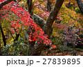京都勝持寺の秋 27839895
