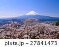 富士山 染井吉野 春の写真 27841473