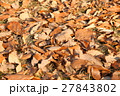 落ち葉 葉 葉っぱの写真 27843802