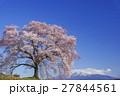 わに塚の桜 春 桜の写真 27844561