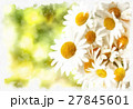 spring daisy flower field vintage 27845601