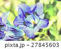 trumpet gentiana spring flower 27845603