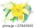spring daffodils in garden, vintage watercolor 27845605