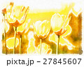 watercolor akvarel effect of spring yellow tulips 27845607