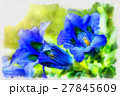 trumpet gentiana blue spring flower in garden 27845609