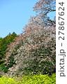 桜 27867624