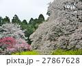 桜 27867628