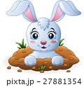 うさぎ ウサギ 兎のイラスト 27881354
