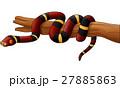 ヘビ 蛇 樹木のイラスト 27885863