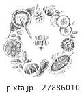 オーガニック 有機 ナチュラルのイラスト 27886010