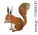 蝦夷リス 27888197