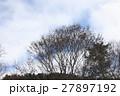 雪山の木と空 戸隠 27897192
