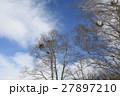 宿り木 冬 27897210