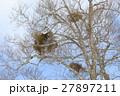 宿り木 冬 27897211