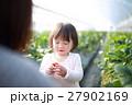 苺狩り (赤ちゃん 女性 イチゴ いちご 苺 フルーツ 果物 ファミリー ママ 母親 デザート) 27902169