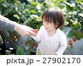 苺狩り (赤ちゃん 女性 イチゴ いちご 苺 フルーツ 果物 ファミリー ママ 母親 デザート) 27902170