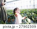 苺狩り (赤ちゃん 女性 イチゴ いちご 苺 フルーツ 果物 レジャー ビニールハウス デザート) 27902309