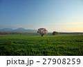 蝦夷山桜 桜 春の写真 27908259