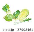 冬野菜_水彩風 27908461