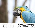 コンゴウインコ 27908772