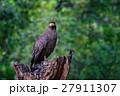 野生動物 野生生物 自然の写真 27911307