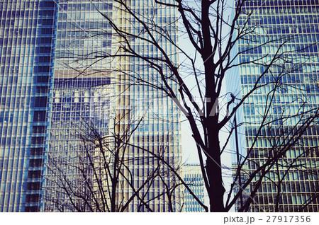 東京、丸の内、冬の街路樹 27917356