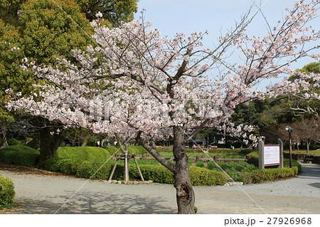 さくら 大村公園 27926968