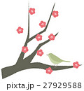 梅 紅梅 春のイラスト 27929588