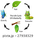 The life cycle of a butterfly 27938329