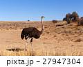 サファリ アフリカ アフリカ大陸の写真 27947304