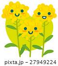 菜の花 親子 春のイラスト 27949224
