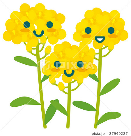 菜の花の親子 27949227