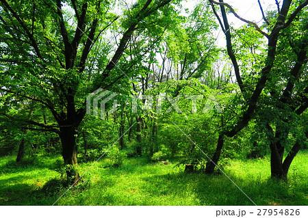 和光樹林公園の森 27954826